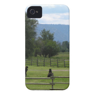 Llamas pastured in a mountain valley iPhone 4 case