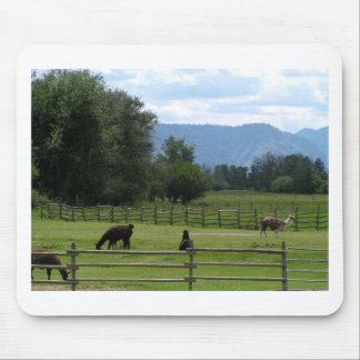 Llamas pastured in a mountain valley mouse pad