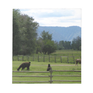 Llamas pastured in a mountain valley notepad