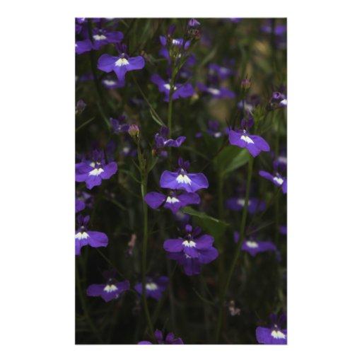 Lobelia, Purple Flowers with Dark Background. Flyer Design
