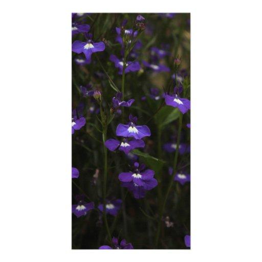 Lobelia, Purple Flowers with Dark Background. Personalized Photo Card