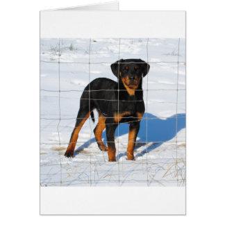 Lobo Rottweiler Card