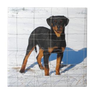 Lobo Rottweiler Ceramic Tile