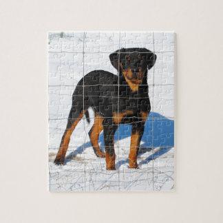 Lobo Rottweiler Jigsaw Puzzle