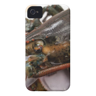 Lobster Case-Mate iPhone 4 Case