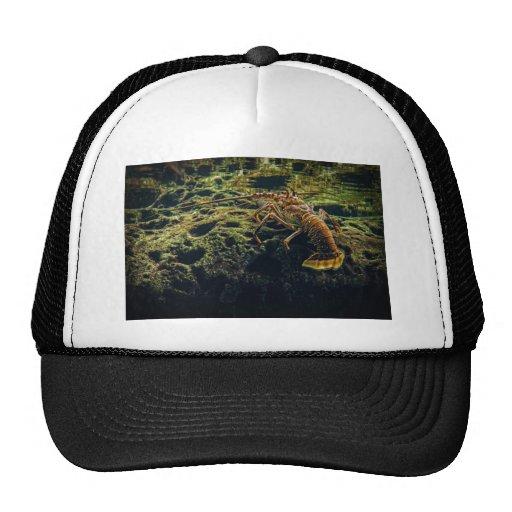 Lobster Trucker Hats