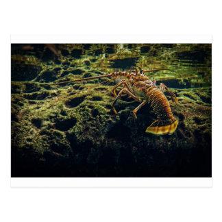 Lobster Postcard