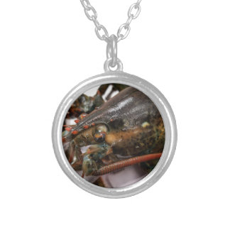 Lobster Silver Plated Necklace