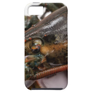 Lobster Tough iPhone 5 Case