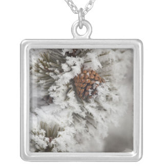 Lodgepole Pine cone in winter in Yellowstone Square Pendant Necklace