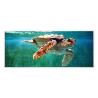 Loggerhead #2 Photo