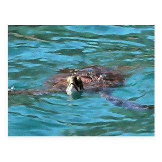Loggerhead Sea Turtle Postcard