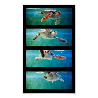 Loggerhead Sea Turtle Study Poster