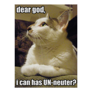 LOLcat - dear god Poster