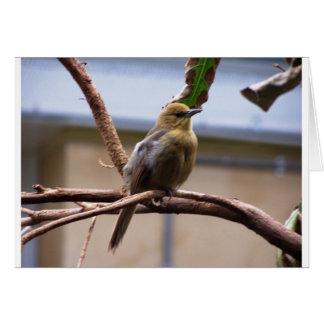 London Zoo bird Card