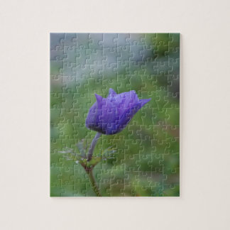 Lone Blue-Purple Anemone Jigsaw Puzzle