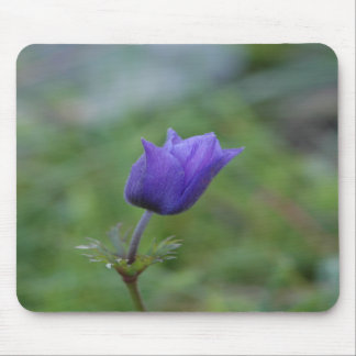 Lone Blue-Purple Anemone Mouse Pad