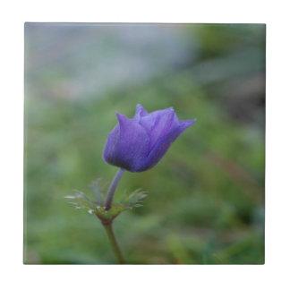 Lone Blue-Purple Anemone Small Square Tile