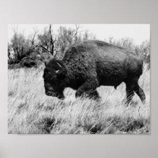 Lone Buffalo Poster