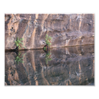 Lone fern by desert water hole photographic print