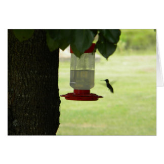 Lone Hummingbird Card