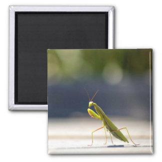 Lone Mantis Square Magnet