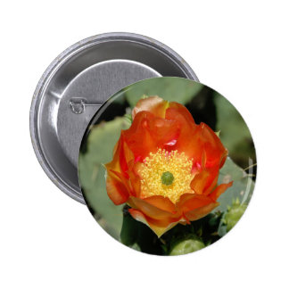 Lone Orange Prickly Pear Pinback Buttons