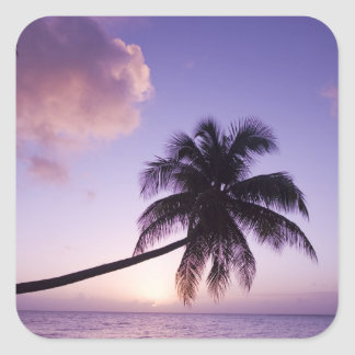Lone palm tree at sunset, Coconut Grove beach Square Sticker