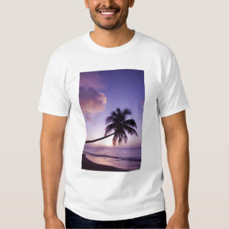 Lone palm tree at sunset, Coconut Grove beach T Shirt