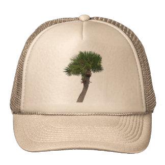 Lone Palm Tree Mesh Hat