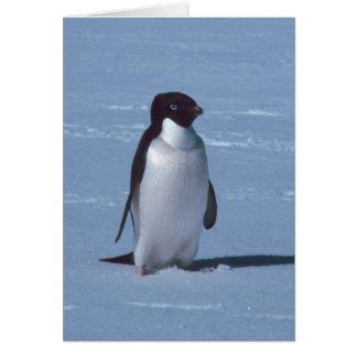 Lone Penguin in snow in snow Card