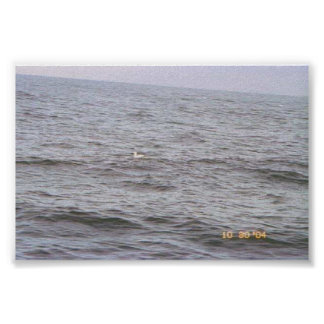 Lone Sea Gull on the Ocean Poster