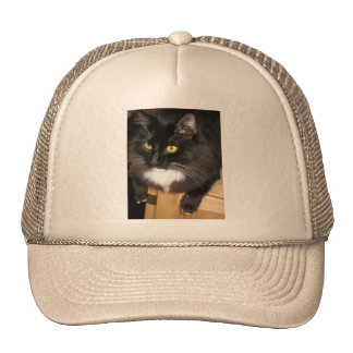 Lone Star Cat Perching on a Table, photograph Cap
