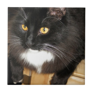 Lone Star Cat Perching on a Table, photograph Tile