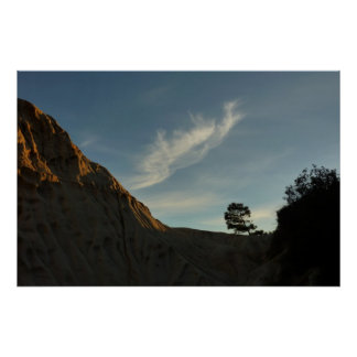 Lone Torrey Pine California Sunset Landscape Poster