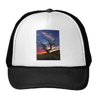 Lone Tree Cap