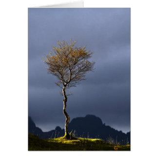 Lone Tree Caught in Sun Card