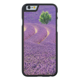 Lone tree in Lavender Field, France Carved Maple iPhone 6 Case