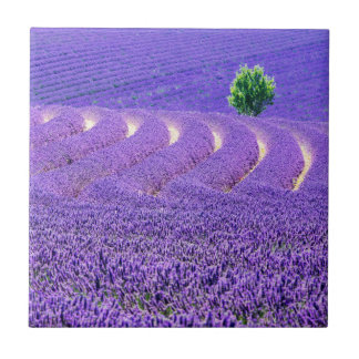 Lone tree in Lavender Field, France Small Square Tile