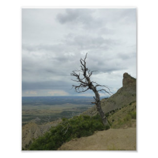 Lone Tree in Mesa Verde Photo Print