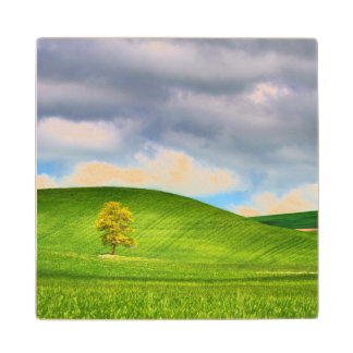 Lone tree surrounded by rolling hills of wheat maple wood coaster