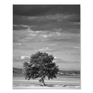 Lone Tree, Wilder Idaho Art Photo