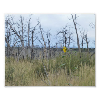 Lone Yellow Flower Photo Print