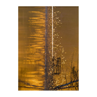 Lonely bench by the lake in the golden light acrylic wall art