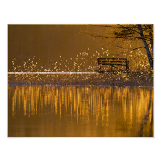 Lonely bench by the lake in the golden light poster