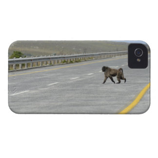 Lonely Chacma baboon crossing highway road iPhone 4 Cases