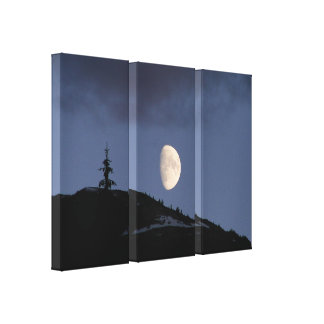 Lonely Companion Stretch Canvas Print