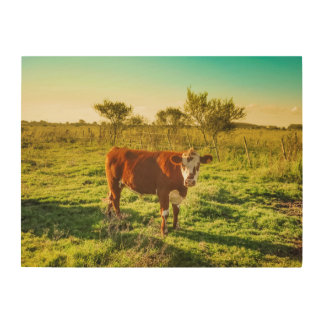 Lonely Cow in the Meadow Facing the Camera Wood Canvas