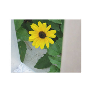 Lonely Daisy Stretched Canvas Print