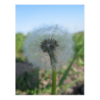 Lonely Dandelion, Send Ugly Postcards Collection
